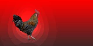 在红色背景的多角形雄鸡来克亨鸡公鸡 免版税库存图片