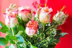 在红色背景的玫瑰 免版税图库摄影