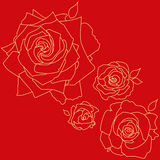 在红色背景的玫瑰 库存图片