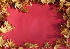 在红色背景的秋天叶子 库存照片