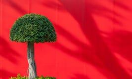 在红色背景的花梢圆的形状的树与拷贝空间 库存图片