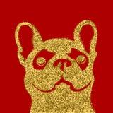 在红色背景的金黄狗 金黄法国牛头犬 免版税库存图片
