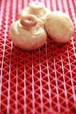 在红色背景的Portabello蘑菇 库存图片