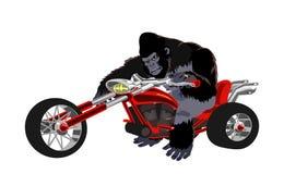 在红色自行车的大猩猩 免版税库存图片