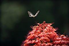 在红色花的蝴蝶 免版税库存图片