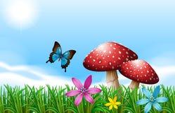 在红色蘑菇附近的一只蝴蝶 免版税库存照片