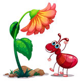 在红色蚂蚁旁边的一朵大花 库存照片