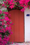 在红色门旁边的开花的九重葛植物 免版税库存照片