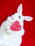 在红色隔绝的白色兔子拿着一个心形的棒棒糖 库存图片