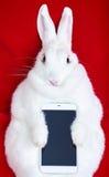 在红色隔绝的白色兔子拿着电话 免版税库存图片