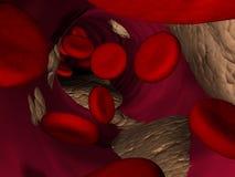 在红色静脉里面的血细胞 库存照片