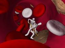 在红色静脉里面的血细胞 免版税库存图片