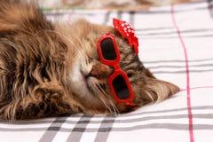 在红色玻璃和红色帽子的猫 免版税图库摄影