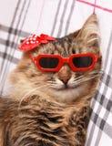 在红色玻璃和红色帽子的猫 库存照片