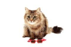在红色玻璃和红色帽子的猫 图库摄影