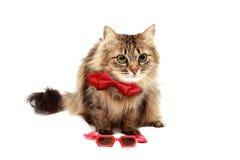 在红色玻璃和红色帽子的猫 库存图片