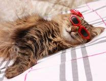 在红色玻璃和红色帽子的猫 免版税库存图片