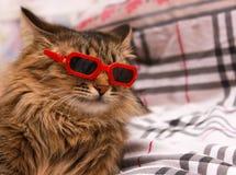 在红色玻璃的猫 免版税图库摄影
