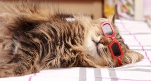 在红色玻璃的猫 免版税库存照片