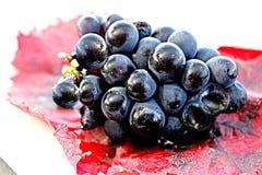 在红色grapeleaf的黑葡萄 库存图片