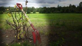 在红醋栗灌木有选择性的阳光的红色铁锹 图库摄影
