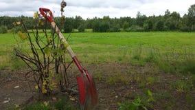 在红醋栗灌木的红色铁锹 免版税图库摄影