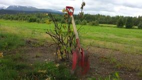 在红醋栗灌木的红色铁锹 免版税库存照片