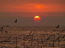 在红颜色天空的渐进性的惊人的日出与许多飞行海鸥的 库存图片