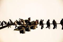 在红绿灯的鸽子 免版税图库摄影