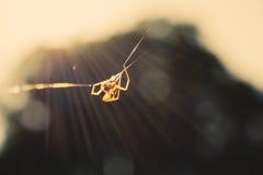 在纤维的蜘蛛 免版税图库摄影