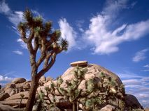 在约书亚树国家公园的盖帽岩石 免版税图库摄影