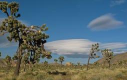 在约书亚树国家公园,加利福尼亚的双突透镜的云彩 免版税库存图片