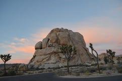 在约书亚树国家公园,加州的日出 免版税库存照片