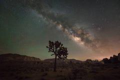 在约书亚树的银河星系 免版税图库摄影