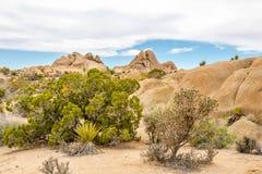 在约书亚树N的超大岩层 P 库存照片