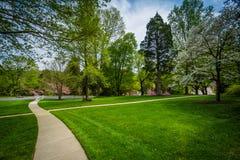 在约翰霍普金斯的走道和春天颜色登上的华盛顿, 免版税库存照片