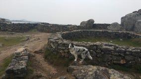 在纪念碑的博德牧羊犬 图库摄影