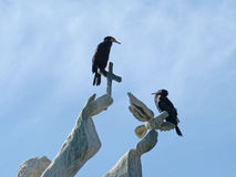 在纪念碑的鸟 库存图片