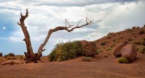 在纪念碑谷的死的树 库存照片