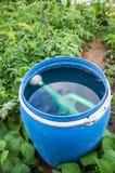 在纬向条花的水 免版税图库摄影