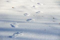 在纯净的白雪的人的脚印在冬天 库存图片