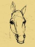 在纸张的马草图 免版税库存照片