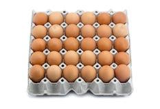 在纸机架的鸡蛋 库存照片