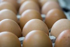 在纸板容器极端宏观庄稼的红皮蛋 免版税库存照片
