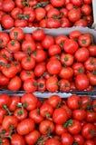 在纸板条板箱的蕃茄 免版税库存照片