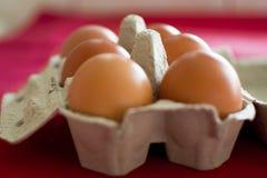 在纸板的鸡蛋 免版税库存照片