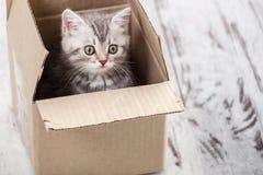 在纸板箱的灰色小猫 免版税库存照片