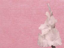 在纸的花与双重幸福的标志 库存照片