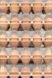 在纸盒的鸡蛋 库存图片