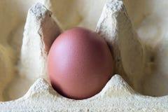 在纸盒配件箱的鸡蛋 库存照片